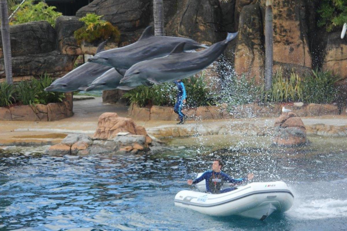 AB Ventus 12VL with dolphins at Seaworld Gold Coast